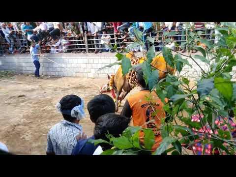 Big boss hori habba in shikaripura 2019