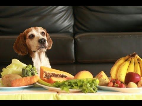 Dog Tries Fruits & Vegetables   Luke The Beagle
