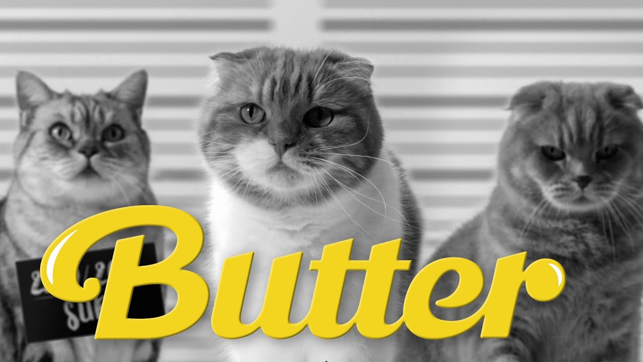 BTS 'Butter' But With Cats Is Here And ARMY Thinks It's Ameowzing ...