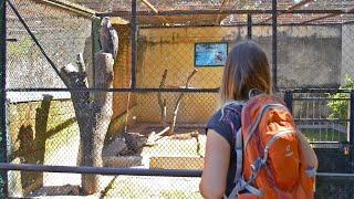 Дикая кошка ест живых хомяков| Мадагаскар| Зоопарк Антананариву| Часть 19