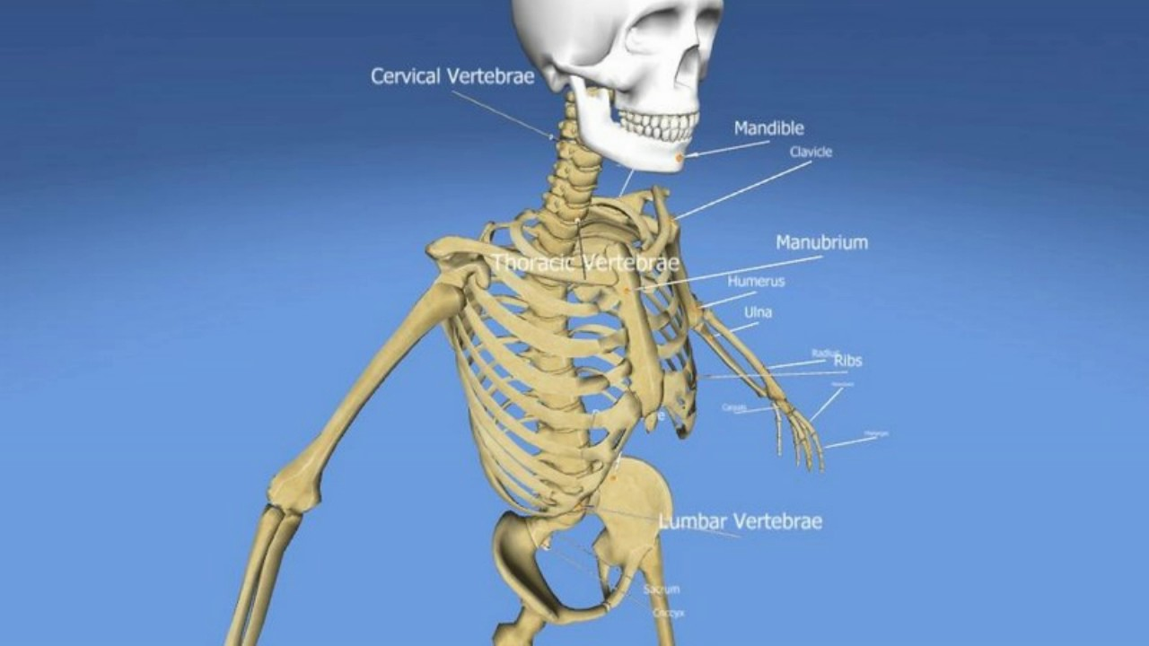 Difference Between Pelvis and Pelvic Girdle - YouTube