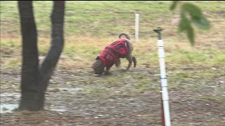 Truffle-Hunting Pups Credited With Making Grower Top In California