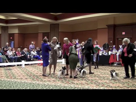 PCA National 2015, Best of Breed