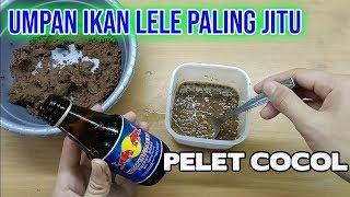 Umpan Ikan Lele Harian Dan Lomba Paling Jitu Media Pelet Cocol