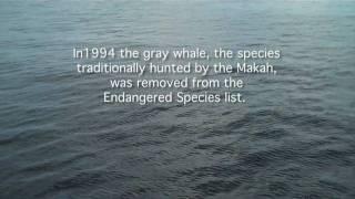 Makah Whaling