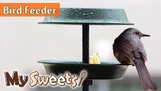 How to make bird feeder