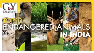 Top 10 Endangered Animals in India | Endangered Species