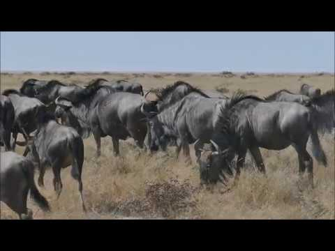 Etosha (Namibia) 2017 - Our Highlights in HD