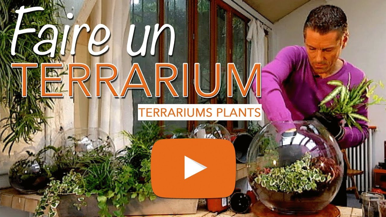 faire un terrarium verre terrariums plants youtube. Black Bedroom Furniture Sets. Home Design Ideas