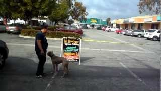 Sandlot K9 Services (obedience Training Demo)