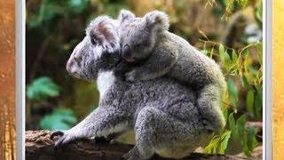 Детям о животных - Сумчатые - От слона до муравья (Выпуск 17)