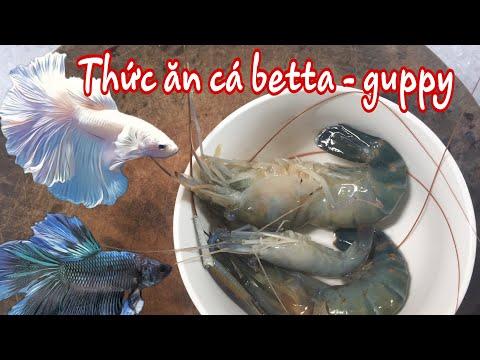 Thức Ăn Cực Kì Bổ Dưỡng Cho Cá Betta Và Guppy. Đơn Giản Dễ Làm.