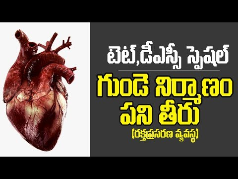 Biology - Heart functions & blood circulation in Heart - (Telugu ...
