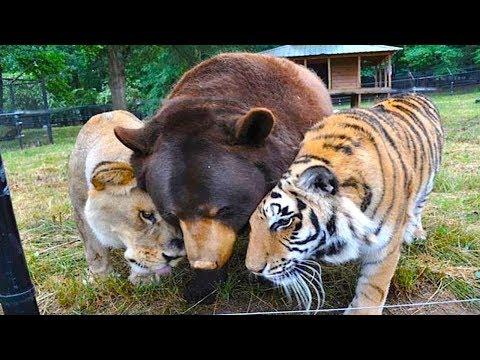 Tiere, die andere Tiere adoptiert haben!