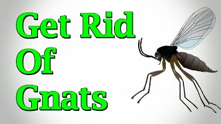 How To Get Rid Of Gnats In The House and Houseplants