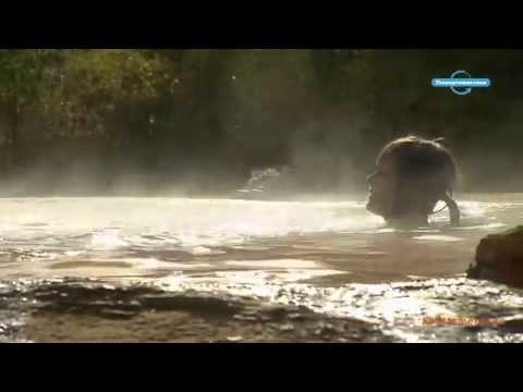 Горячие источники. Натуральный гейзер (Армения)