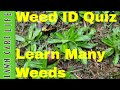 Weed Identification Quiz  - Test Your Knowledge on Lawn Weeds