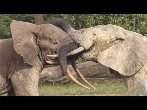 Elephants' Incredible Intelligence | Wild Files with Maddie