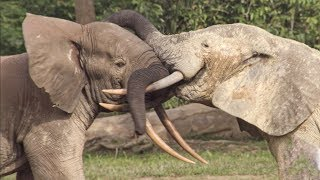 Elephants' Incredible Intelligence | Wild Files with Maddie Moate | BBC Earth