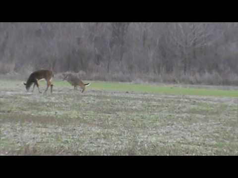 Deer Hunting In The Mississippi Delta
