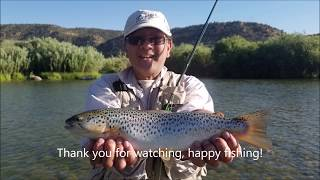 Big trout dry fly fishing AK47 San Juan River July 2018
