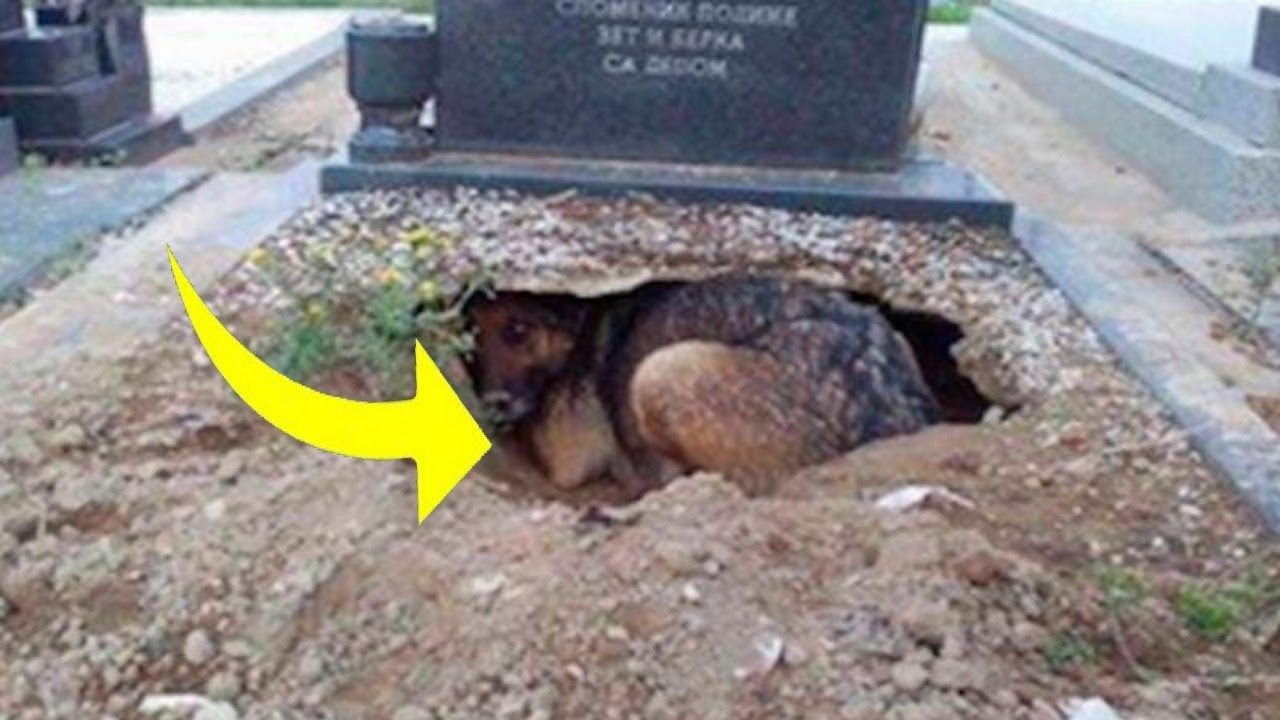 Dog Refuses To Leave Grave, Until One Woman Realizes She's Hiding Something