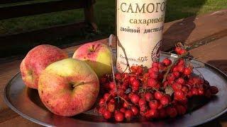 Как приготовить рябиновую настойку с яблоками? / Рецепты настоек / Самогон Саныч