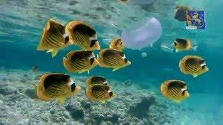 Яркие рыбки в Египте, снято камерой 4K SJ8000 в аквабоксе.