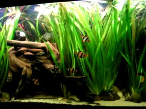 Update Of My 420 Liters Tropical Asia Fish Tank / Asienbecken [6/6]