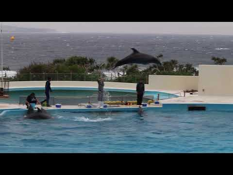 Dolphin Show Churaumi Aquarium