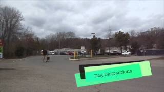 "Rottweiler ""hercules"" Before And After Video! Northern Virginia Dog Training"