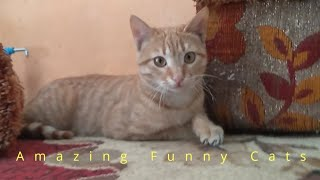 Amazing Funny Cats