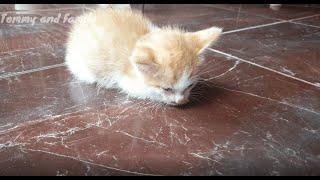 Gangguan Syaraf, Kucing ini Luar Biasa!.