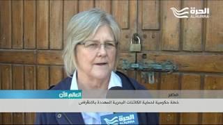 خطة وطنية مصرية لحماية الكائنات البحرية وعلى رأسها السلاحف