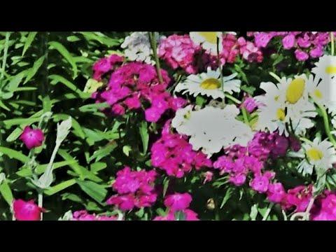 Видео: Дача в городе