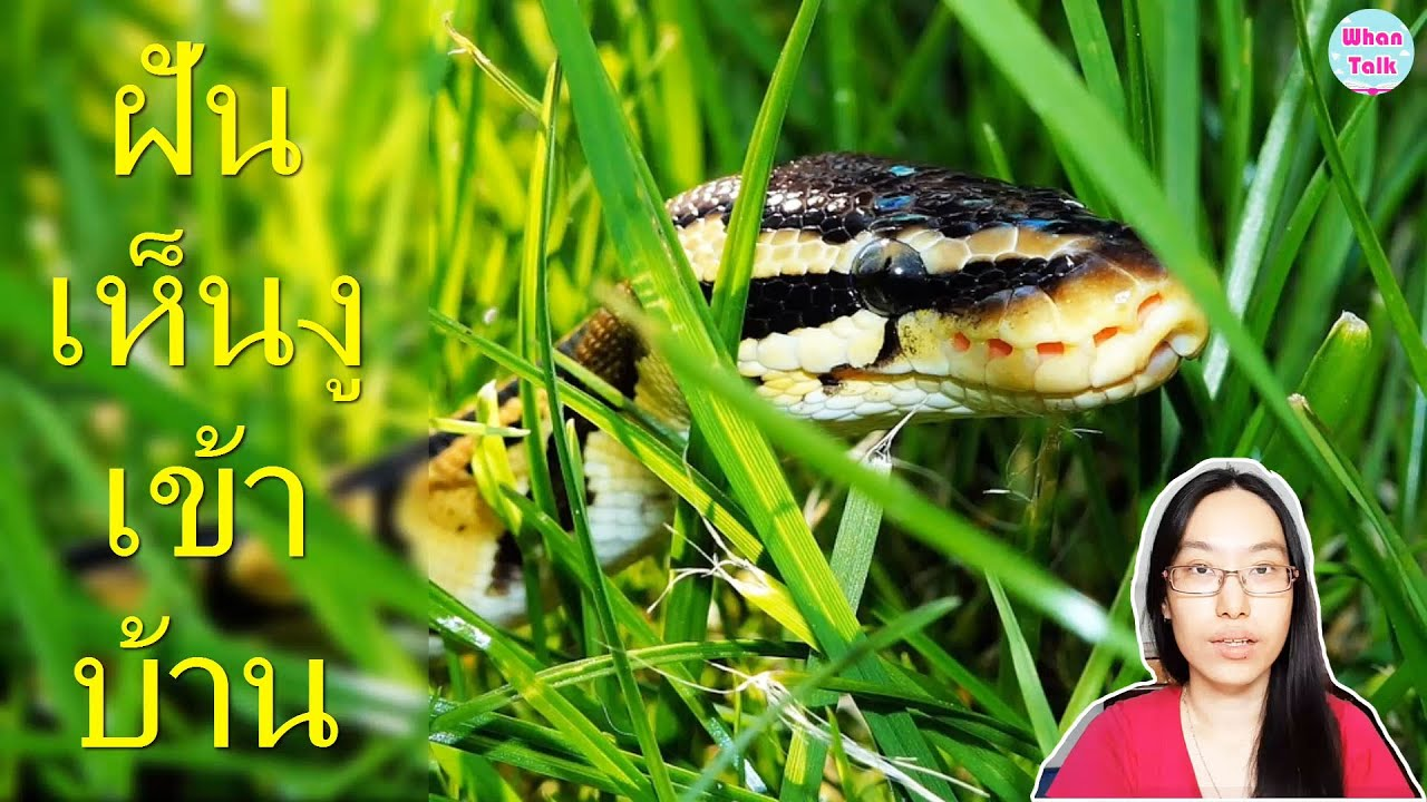 ฝันว่างูเข้าบ้าน / ทำนายทำนายฝันว่างูเข้าบ้าน / ทำนายฝัน EP. 37