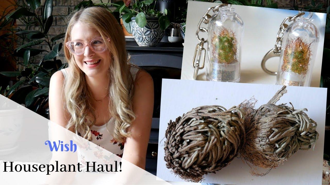 Wish Houseplant Haul | Live Plants!!!