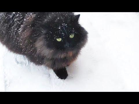 Really fluffy black cat in winter