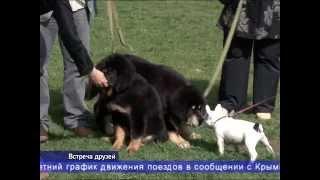 В Крыму прошла выставка редких пород собак