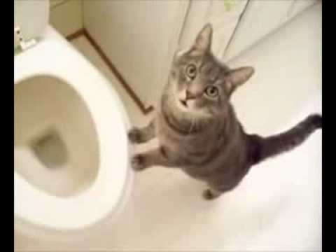 how to tell if your cat has a bladder infection