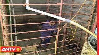 Thâm nhập đường dây vận chuyển chó lậu liên tỉnh | Điều tra | ANTV