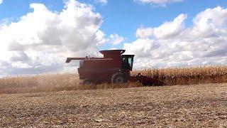 case ih 1680 combine cummins turbo diesel harvesting corn 1992