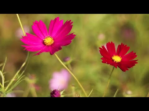 Самоделки, Изобретения и Удивительная техника 152 / Homemade , Inventions and Amazing Technology from YouTube · Duration:  10 minutes 4 seconds