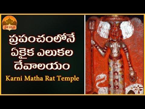 Karni Mata Rat Temple at Deshnoke near Bikaner in Rajasthan   Temple Wonders, Miracles and Mysteries