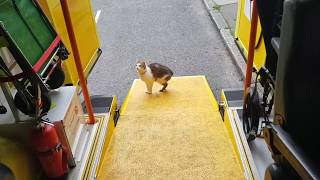 Funny Cat with no tail visits a ambulance