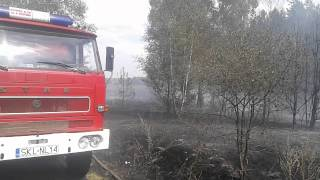 Pożar nieużytków oraz samosiejek przy wysokim lesie Koski