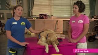 Socialization: Canine Companions Extraordinary Puppy