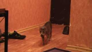 кот приносит пробку от бутылки