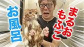 It was tough to give both Maruo & Mofuko a bath
