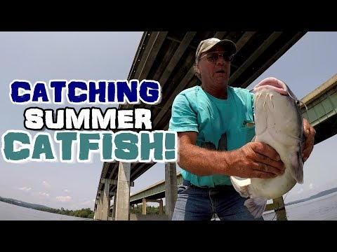 How To Catch Catfish In The Summer - Catfishing Techniques To Try!